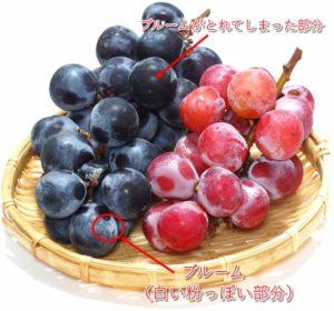 ブドウのブルーム