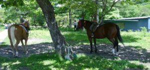榛名湖で休憩する馬