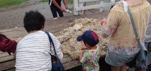 刈られた羊毛