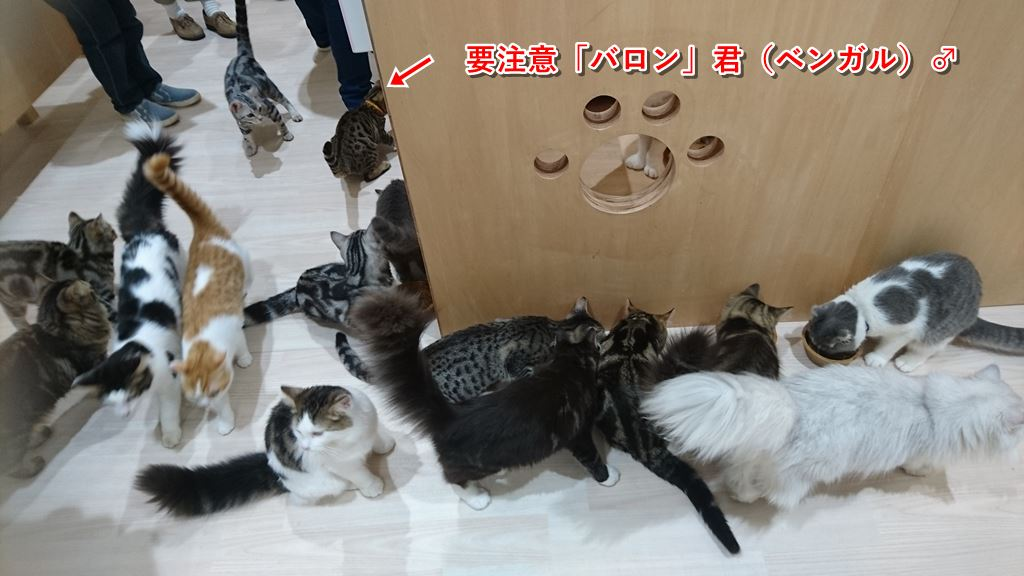 昼食中のネコ達
