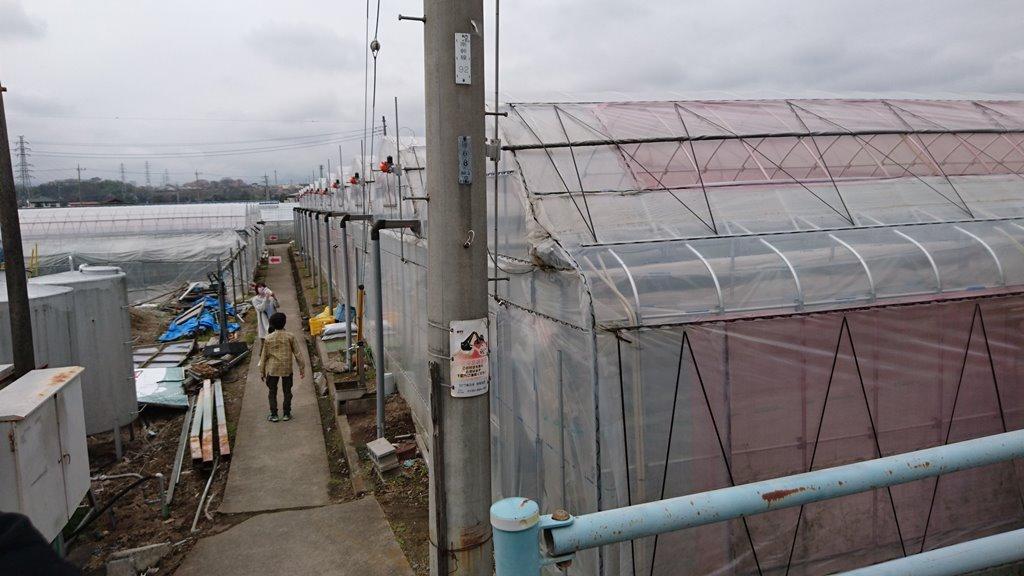須田いちご園ビニールハウス